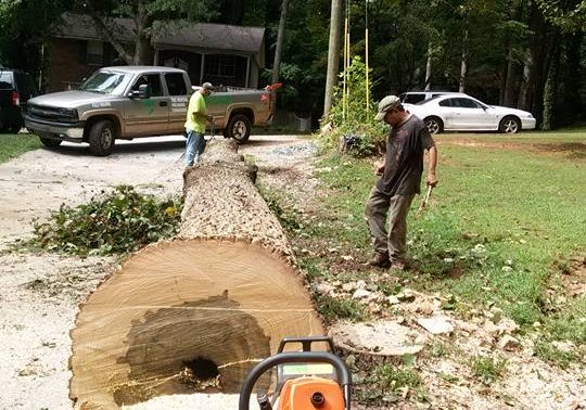 tree removal powder springs