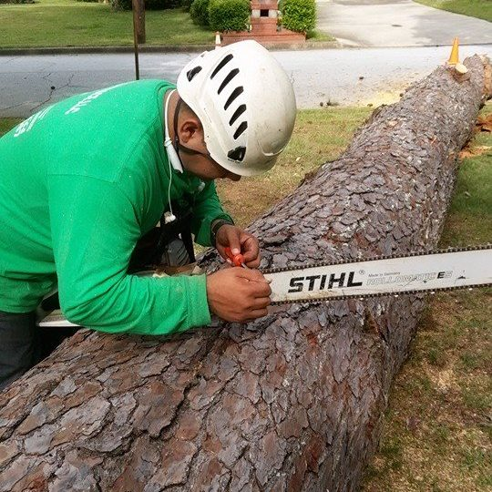 tree care powder springs